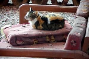 Bishbishi--Cat1764