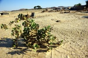 El-Beer-Sudan-3906