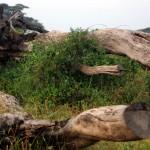 Amboseli-P8800