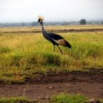 Amboseli-P8973