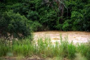 Fluss-MalawiP0760