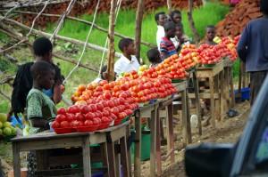 Malawi-Tomaten-P0815